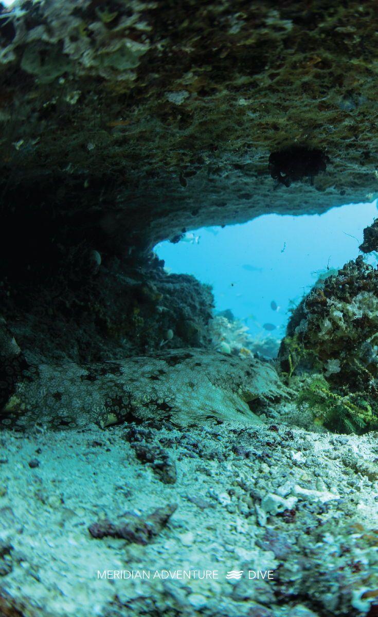 Pin On Sea Life