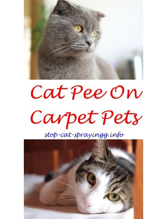 Reduce Water Retention Cat Repellent Spray Indoor Reviews Cat