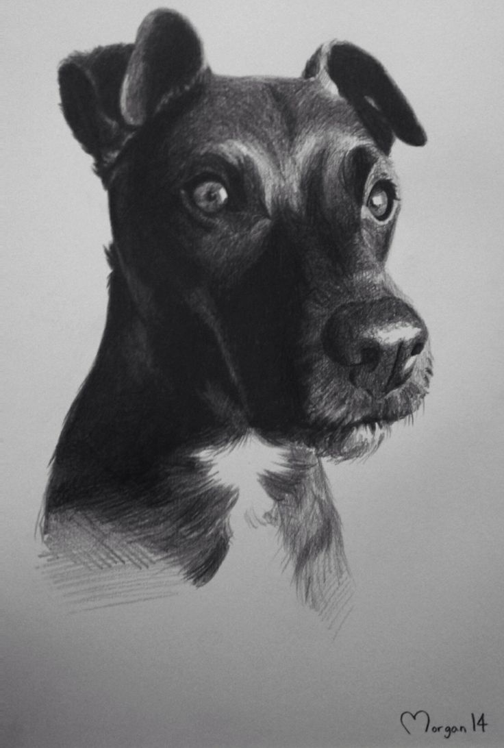Patterdale terrier drawing, pencil, sketch hayleymorganart commisions welcome