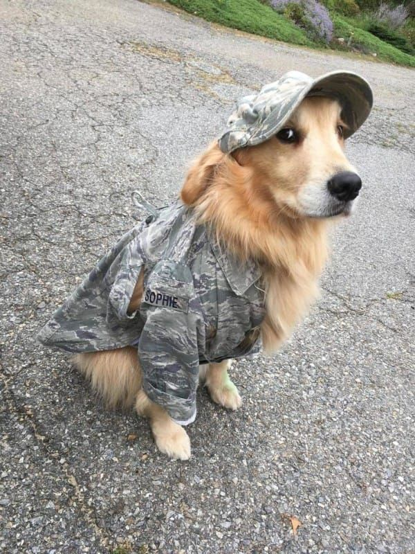 Veteran Donates His Old Uniform To Help Therapy Dog Heal Wounded Warriors. Therapy support is one of the most powerful and important jobs among service dogs.