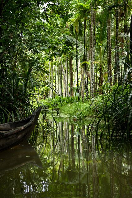Kerala Backwaters - Kerala, South India.  It has numerous tour and travel destinations. The Kerala backwaters comprise of a chain of brackish lagoons and lakes lying parallel to the Arabian Sea line.