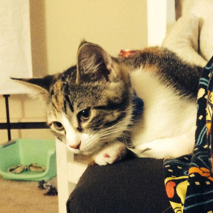 My waddle cat Quiwii (kiwi)