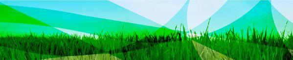 Pulso Verde :: Linda Escalante Químicos tóxicos en los aromatizantes