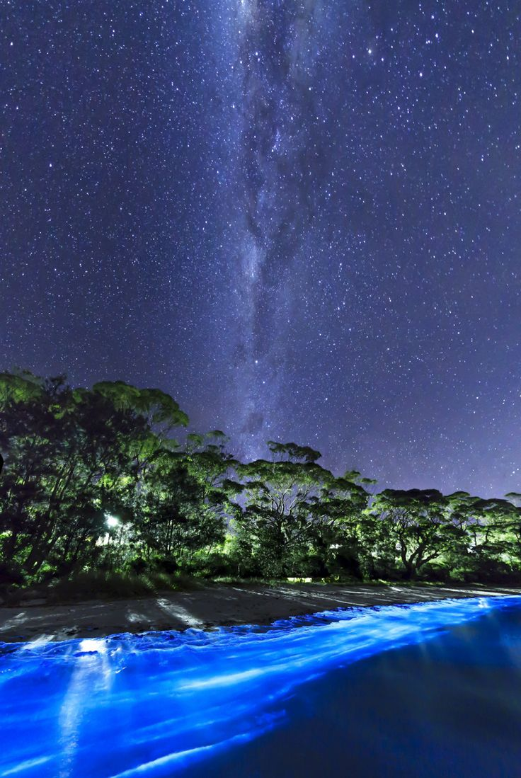 Something Beautiful And Supernatural Happened At A Beach In Australia   Bioluminescent Plankton 2