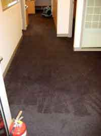 Professionals Dry And Wet Carpets Cleaner Sydney #dry #wet #carpets #sydney, #wet #carpet #cleaner, #professionals #wet #carpet http://philippines.remmont.com/professionals-dry-and-wet-carpets-cleaner-sydney-dry-wet-carpets-sydney-wet-carpet-cleaner-professionals-wet-carpet/  Professional Carpet Cleaners In Sydney Here at Sydney Wet Carpet. we can solve all your problems in regard to wet carpet, flood damage. water extraction and water damage of carpets and floors in all suburbs of Sydney…
