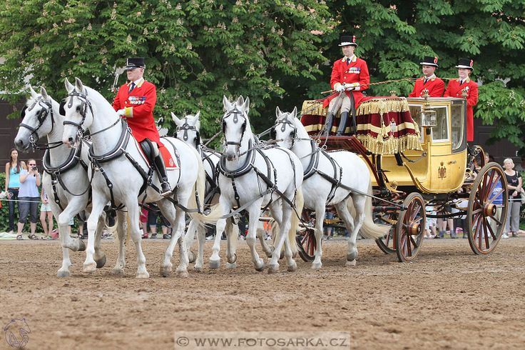 Den starokladrubského koně