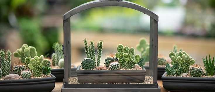 5 Care Tips to Keep Your Cactus Happy