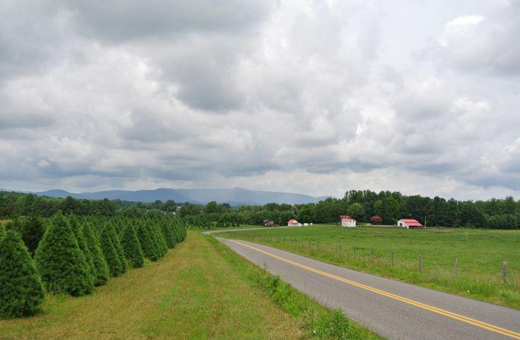 Christmas Tree Farms In Va Beatiful Tree - Christmas Tree Farm In Virginia