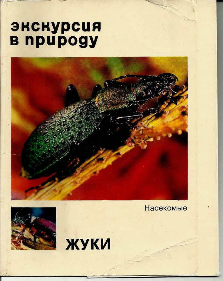 Beetles, Insects, Set of 25 - Russian Vintage Postcard Photo Unused 1977 by LucyMarket on Etsy