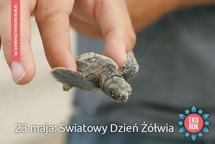 Dzień Żółwi