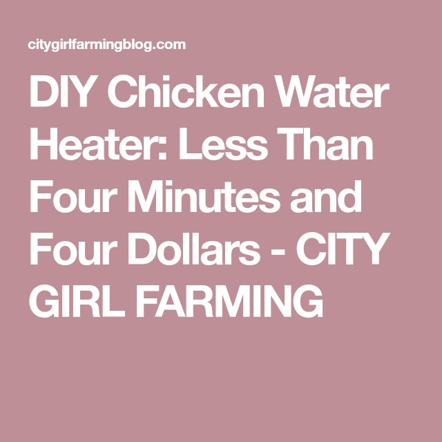 DIY Chicken Water Heater: Less Than Four Minutes and Four Dollars - CITY GIRL FARMING