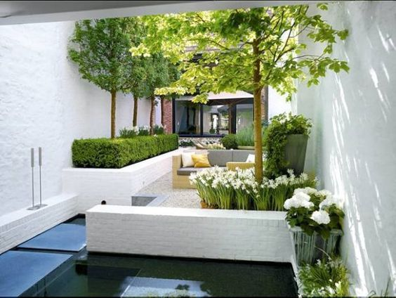 gravelled compact courtyard with white low wall planters   clipped low hedge with tall globe shaped trees and spring bulbs: