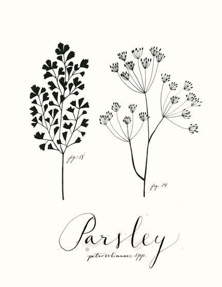 Parsley 85x11 Culinary Art Collection by evajuliet on Etsy, $22.00
