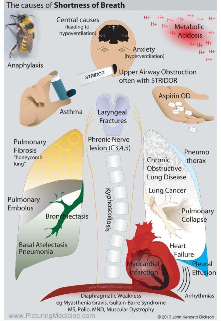 58 best Nursing (COPD, Emphysema, Bronchitis) images on ...
