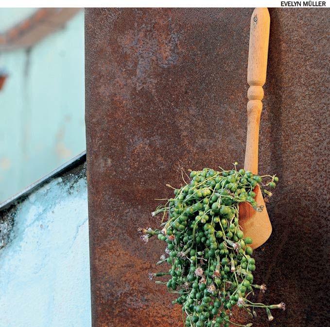 Conchas de madeira podem hospedar plantas, inclusive pendentes como a suculenta colar-de-pérolas.