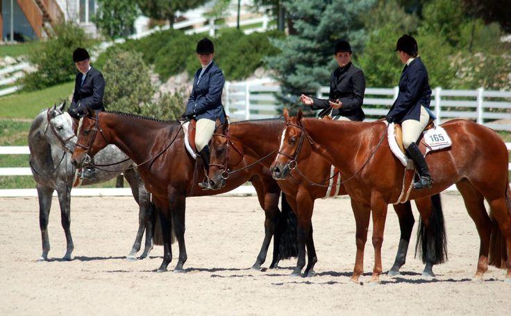hunter under saddle horses   Hunter Under Saddle--Quarter Horse Style!