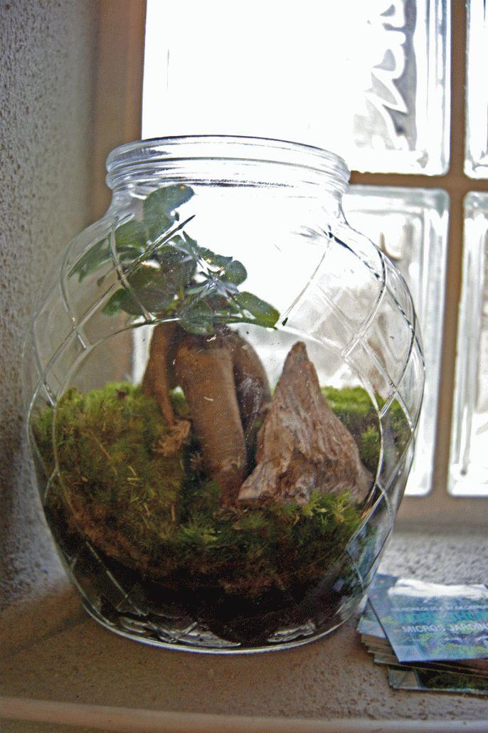 Réalisez un petit terrarium déco très facilement grâce à ce tutoriel illustré d'une vidéo. Les terrariums sont de petits jardins tropicaux ou désertiques très tendance et facile à réaliser.
