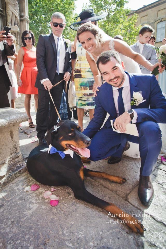 un chien en tenue de cérémonie! #mariage #wedding #dog #original #suitup
