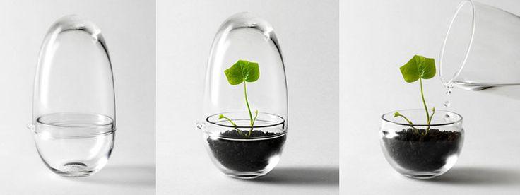Grow Mini Greenhouse by Caroline Wetterling