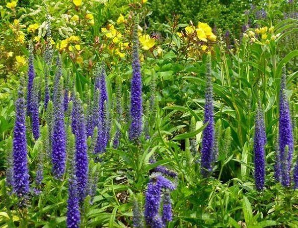 Si necesitas una planta cubresuelos para tu jardín te interesa echar un vistazo a esta selección de 18 plantas cubresuelos con flor que traemos hoy. Son plantas que cubren muy bien el suelo ya al m…