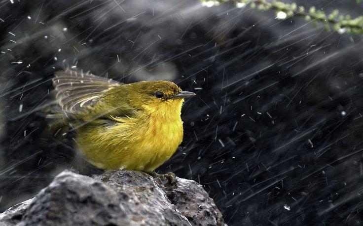 Birds-In-the-Rain.jpg (1920×1200)