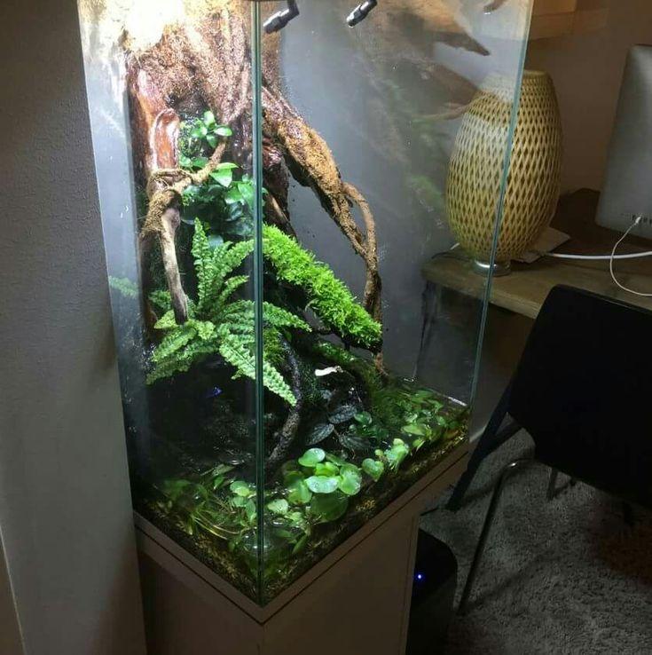 68 Best Vivaria Images On Pinterest Vivarium Dart Frogs