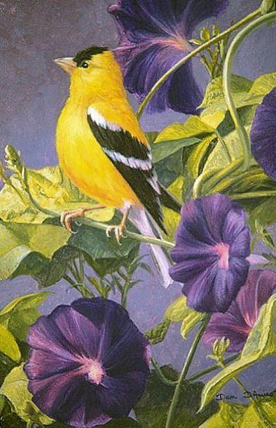 """Goldfinch in Morning Glories"" / Artist: Dan D'Amico"