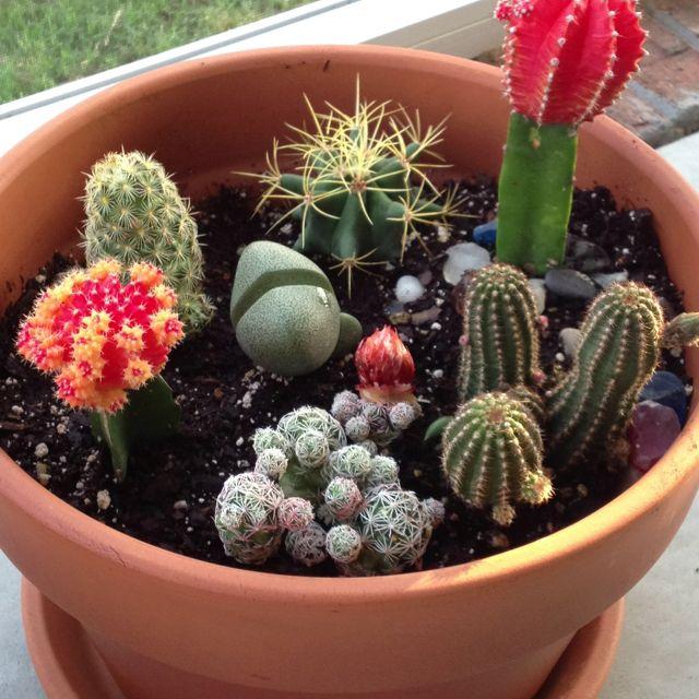 Mini Cactus Garden Just Planted!
