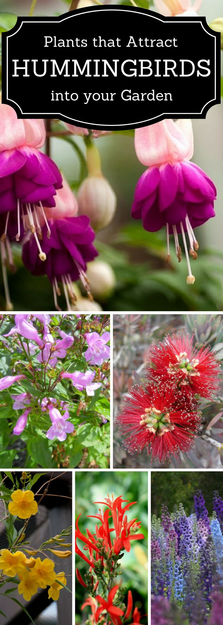 Love Hummingbirds, here are some plants that attract Hummers