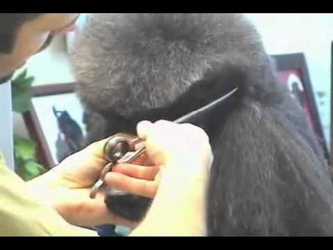 Peview the professional secrets and learn how to trim a perfect top knot in the Standard Poodle Grooming DVD from award winning pet groomers and salon owners, Sue Zecco & Jay Scruggs. Sue & Jay have won multiple Best Overall Groomer awards, Cardinal Crystal Achievement Awards and American Groomer of the Year titles. Available at www.lambertvetsu...