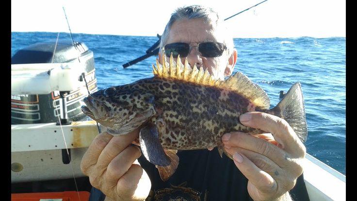 Fishing Perth WA Western Wirrah at Direction bank