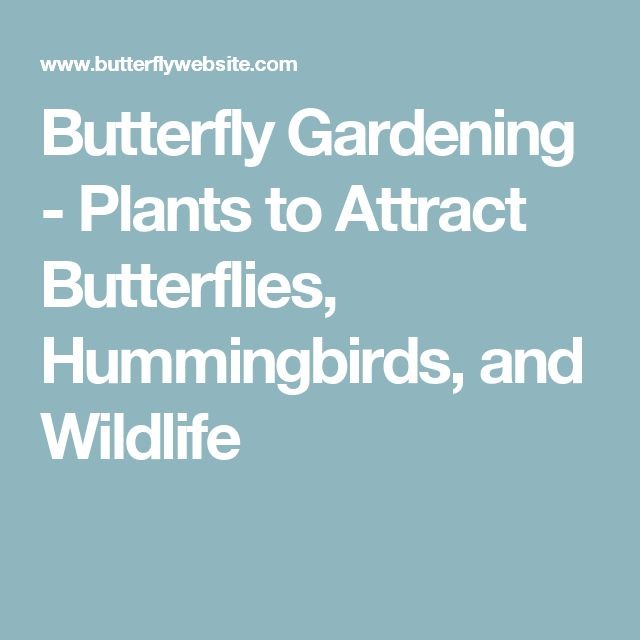 Butterfly Gardening - Plants to Attract Butterflies, Hummingbirds, and Wildlife