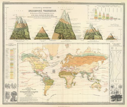 """Geographical distribution of indigenous vegetation. The physical atlas of natural phenomena Henfrey, Arthur; Johnston, Alexander Keith; Schouw, Joakim Frederik, 1854 Col. lithograph. Illustration of """"The distribution of plants in a perpendicular direction …"""" shows the Andes, Teneriffe, Himalaya, Alps & Pyrenees and Lapland. Inset charts: Regions of altitude corresponding to isothermal zones — Graphical statistics of the most important families of plants. ..."""