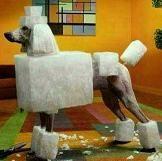 square poodle cut: Sugar Cubes, New Hair, Dogs Grooms, Standards Poodle, Hair Cut, Poodle Color Pink, Poodle Cut, Poodle Haircuts, Creative Grooms