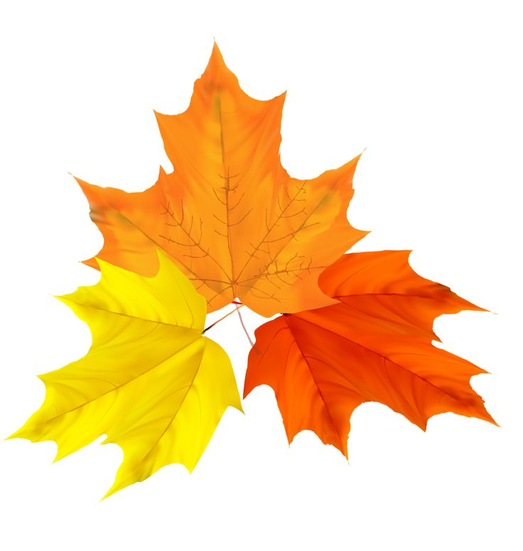 15 best Clip Art Autumn Leaves images on Pinterest ...