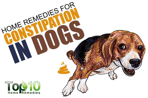 If your four-legged friend has not had a bowel movement in more than two days or if he strains, crouches or cries out when attempting to poop, then he is suffering from constipation. Constipation, which means difficult, infrequent or absent bowel movements, is a very common problem in dogs. Other telltale signs of constipation include …
