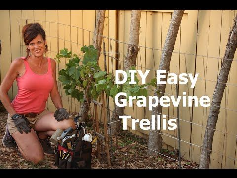 Here S How To Make A Diy Easy Grapevine Trellis Quick