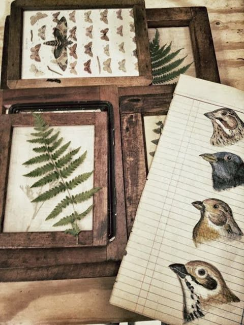 Vintage flora and fauna charts