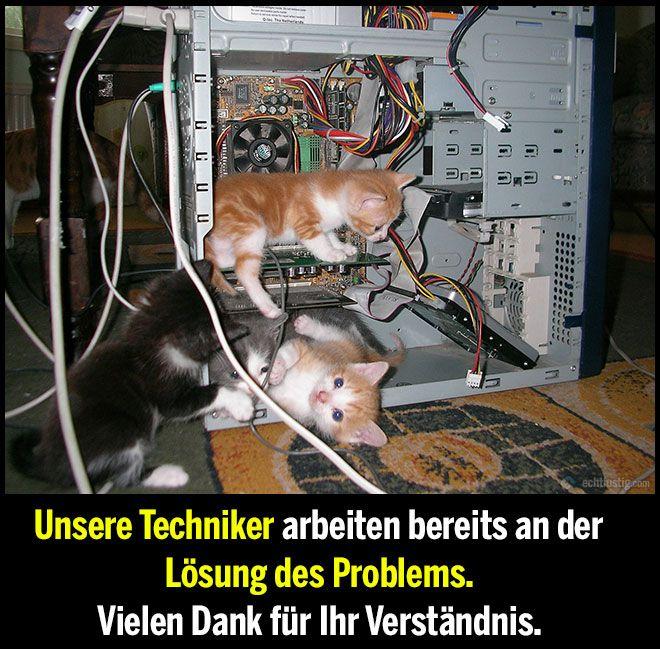 Unsere Techniker sind bereits informiert (Tiere Bilder) - Tags: arbeiten, computer, kätzchen, katze, niedlich, problem, reparieren, süß, techniker, verständnis