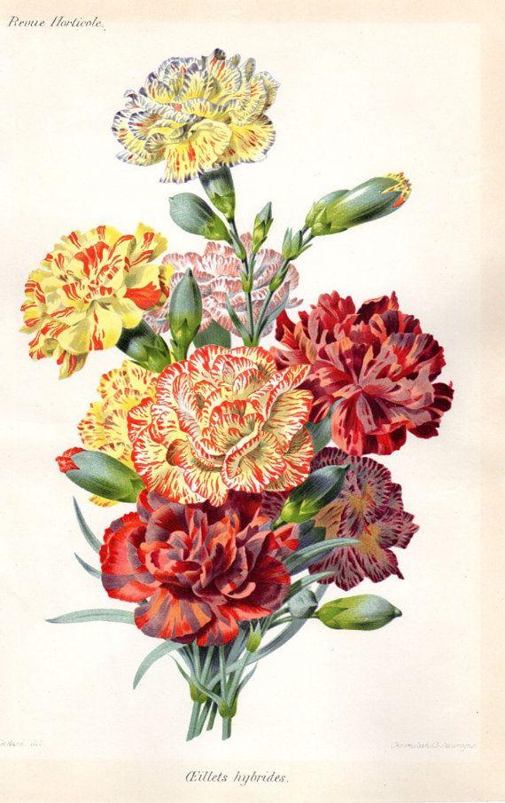 1883 Antique Botanical Print French Botanical by AntiquarianPrints, $35.00