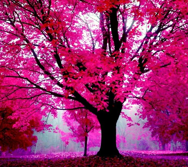 Pink Trees Wallpapers Pinterest Autumn Trees