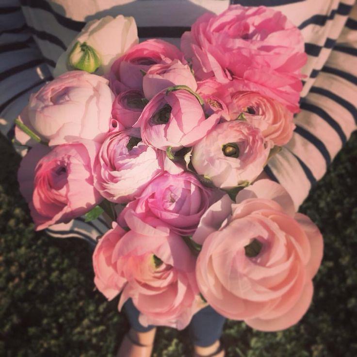 Pink Ranunculus Avonlea Flowers