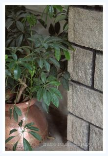 Indian home- garden decor