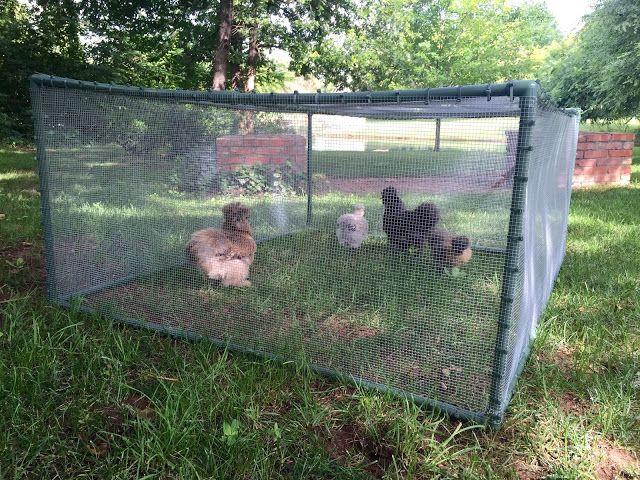 DIY Cheap and Easy Portable Chicken   Rabbit Run   Coop