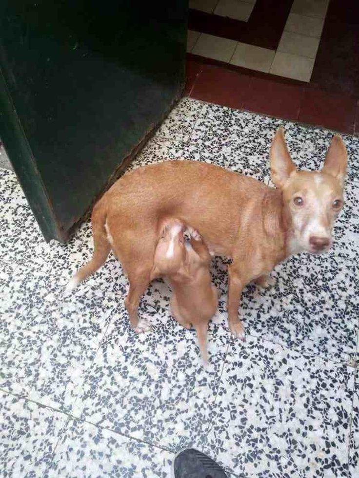 Un hombre de Sevilla enfermo de cáncer necesita ayuda para su perrita y sus cachorros. No tiene ni para pienso y les da pan duro: #sevilla #españa #cancer #perro #perros #animales #animal #mascota #mascotas #noticia #noticias #schnauzi