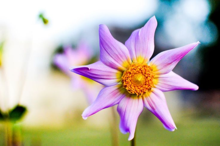 Flower of peaceful colors