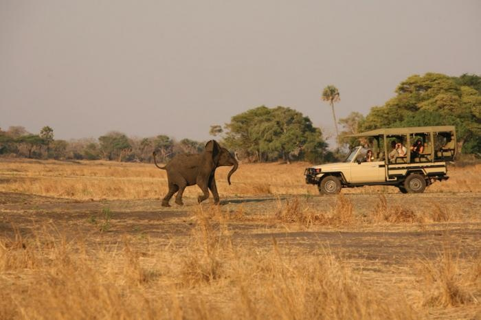 #elephant from close quarters | Holidays in Tanzania | Mbali Mbali Lodges and Camps
