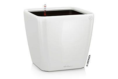 Lechuza Quadro Premium 35 cm blanc