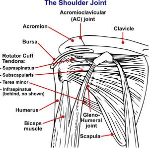 Gerber's Lift Off Test – Orthopedic Shoulder Examination
