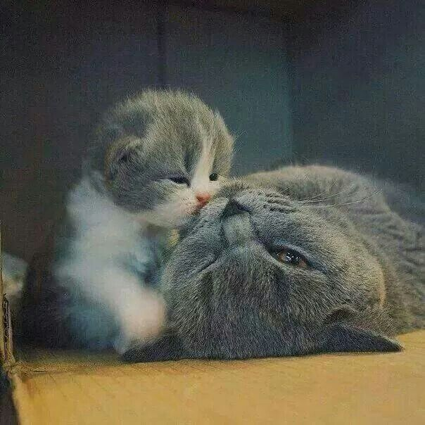 i luv you mamma....kiss kiss kiss